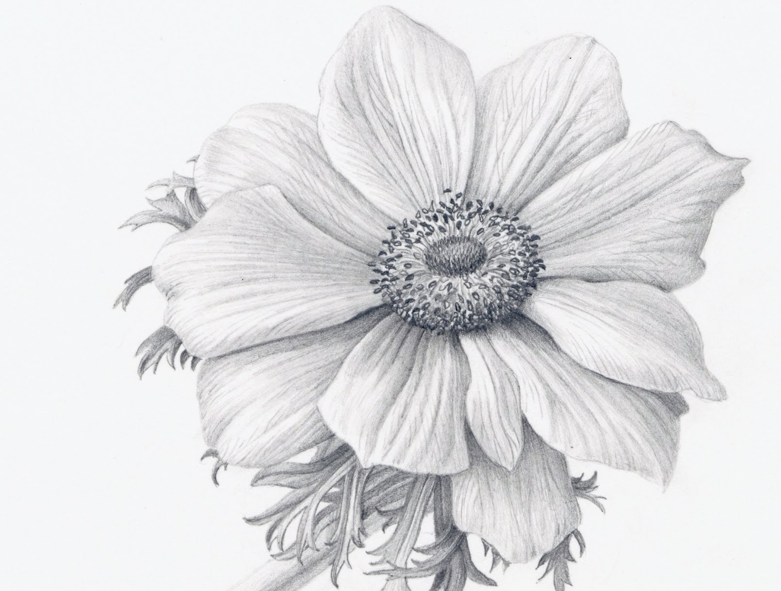 1610x1219 Gallery Bouquet Black And White Shaded Flower Drawing,