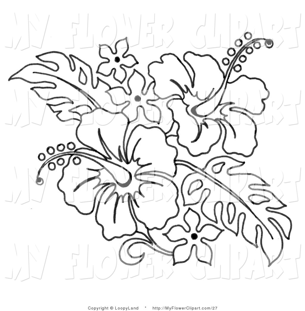 1024x1044 Clip Art Of A Coloring Page Of A Hibiscus Flower Bouquet By