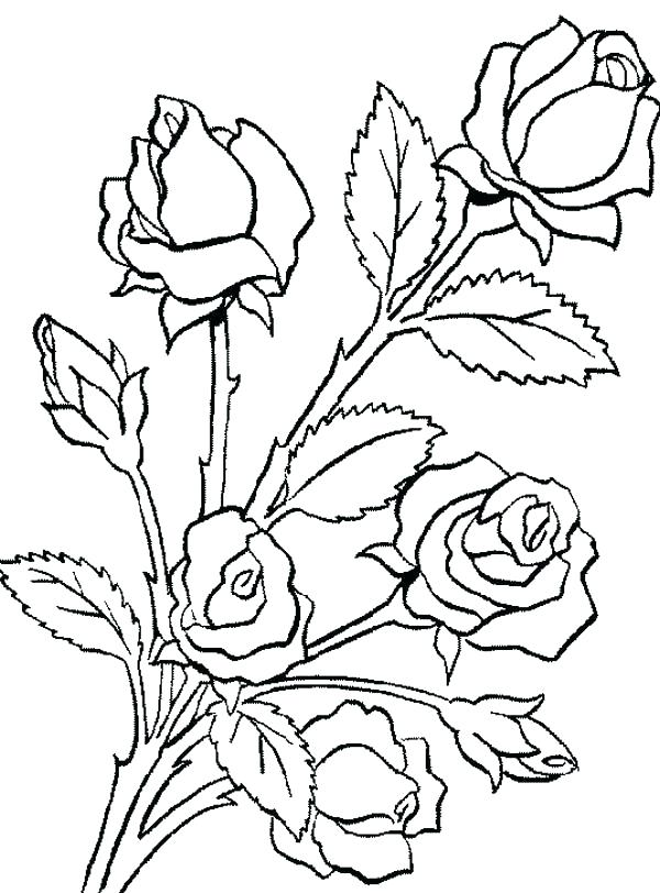 600x812 Roses Coloring Pages Valentine Heart Of Roses Bouquet Line Art