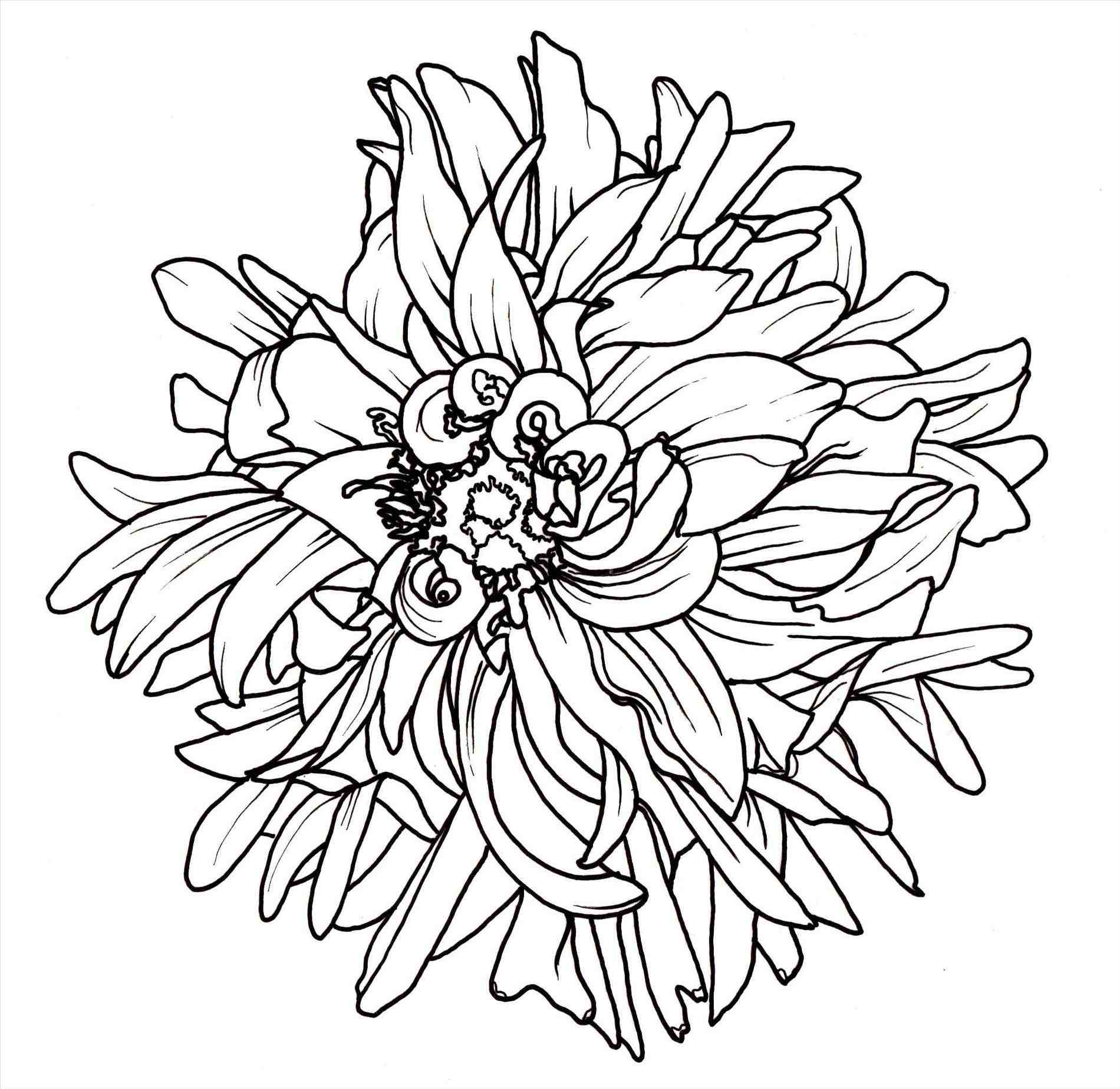 1900x1847 Flower Line Drawings