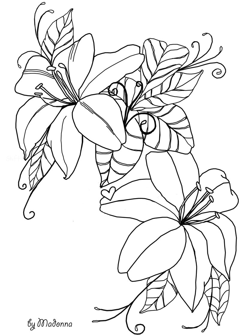 800x1114 Flowers Line Drawing Stock By Madonnakp89