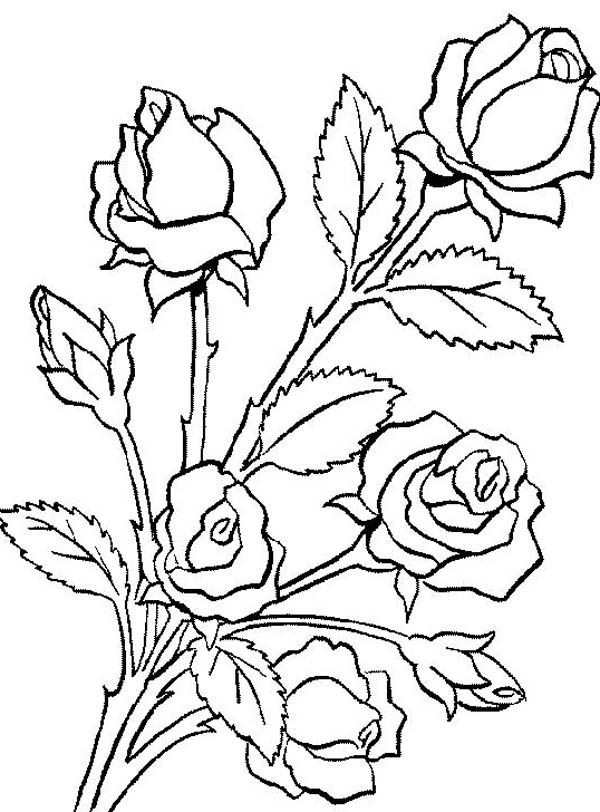 Bouquet Of Roses Drawing at GetDrawings.com   Free for personal use ...