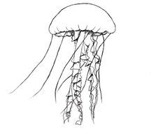 236x195 How To Draw A Jelly Fish Paper Drawing, Pencil Eraser And Jelly Fish