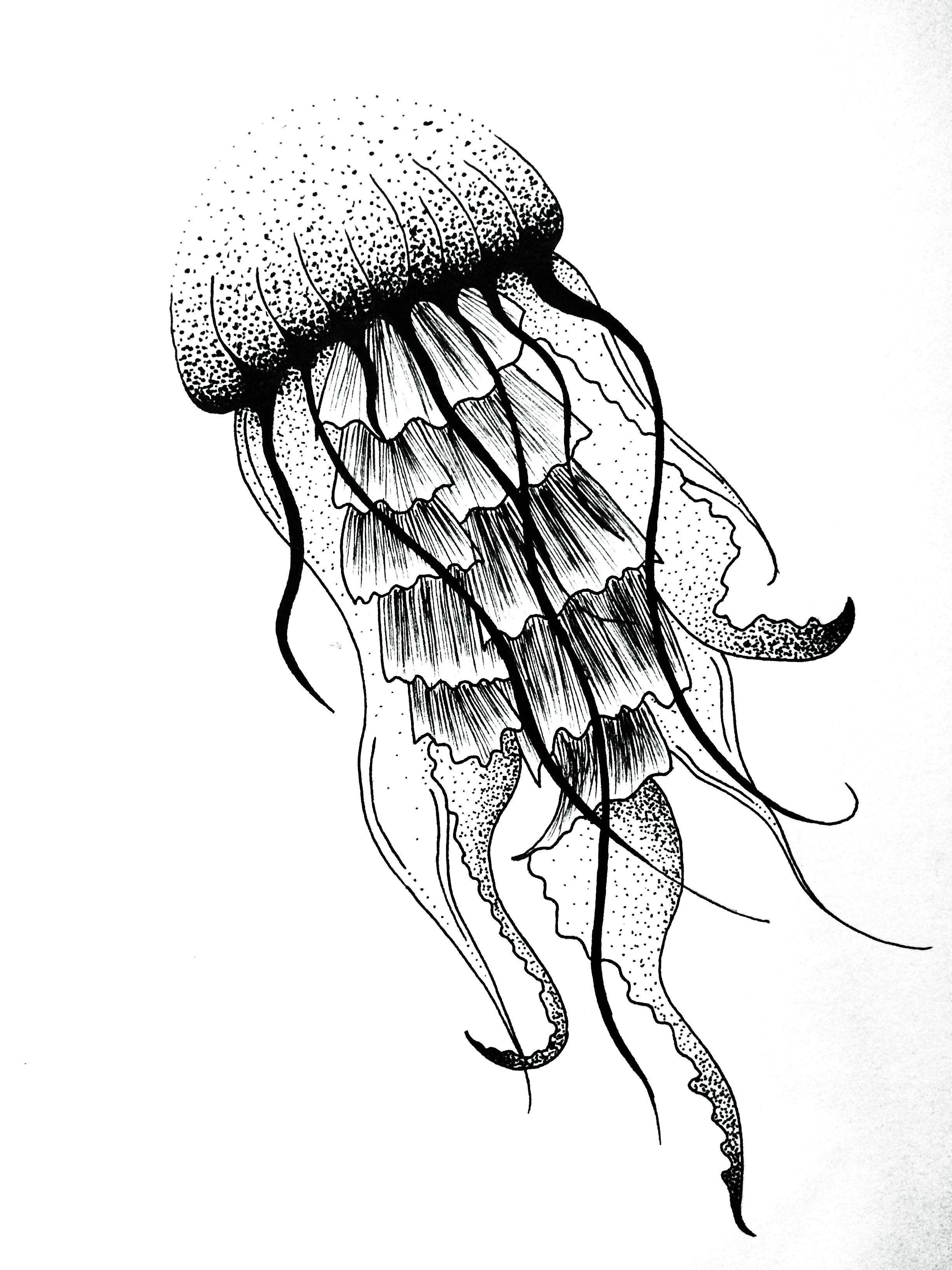 2448x3264 Jellyfish Dotwork Art Design Tattoo Jules Verne Graphic