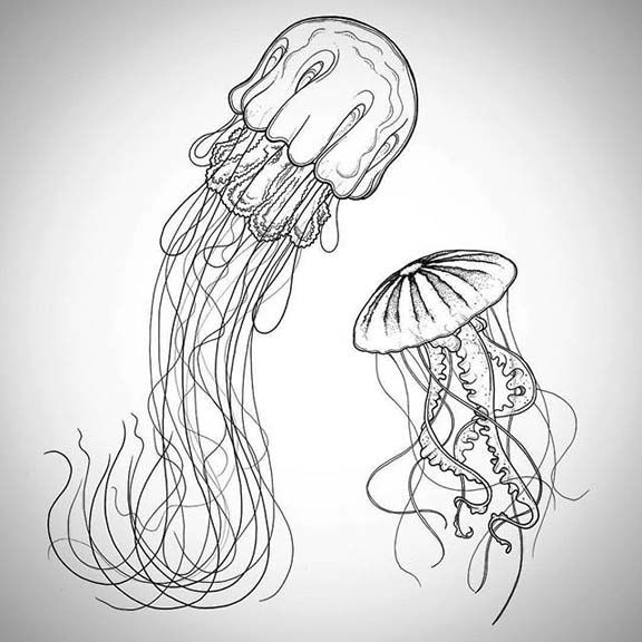 576x576 How To Draw A Simple Jellyfish Jellyfish Drawing