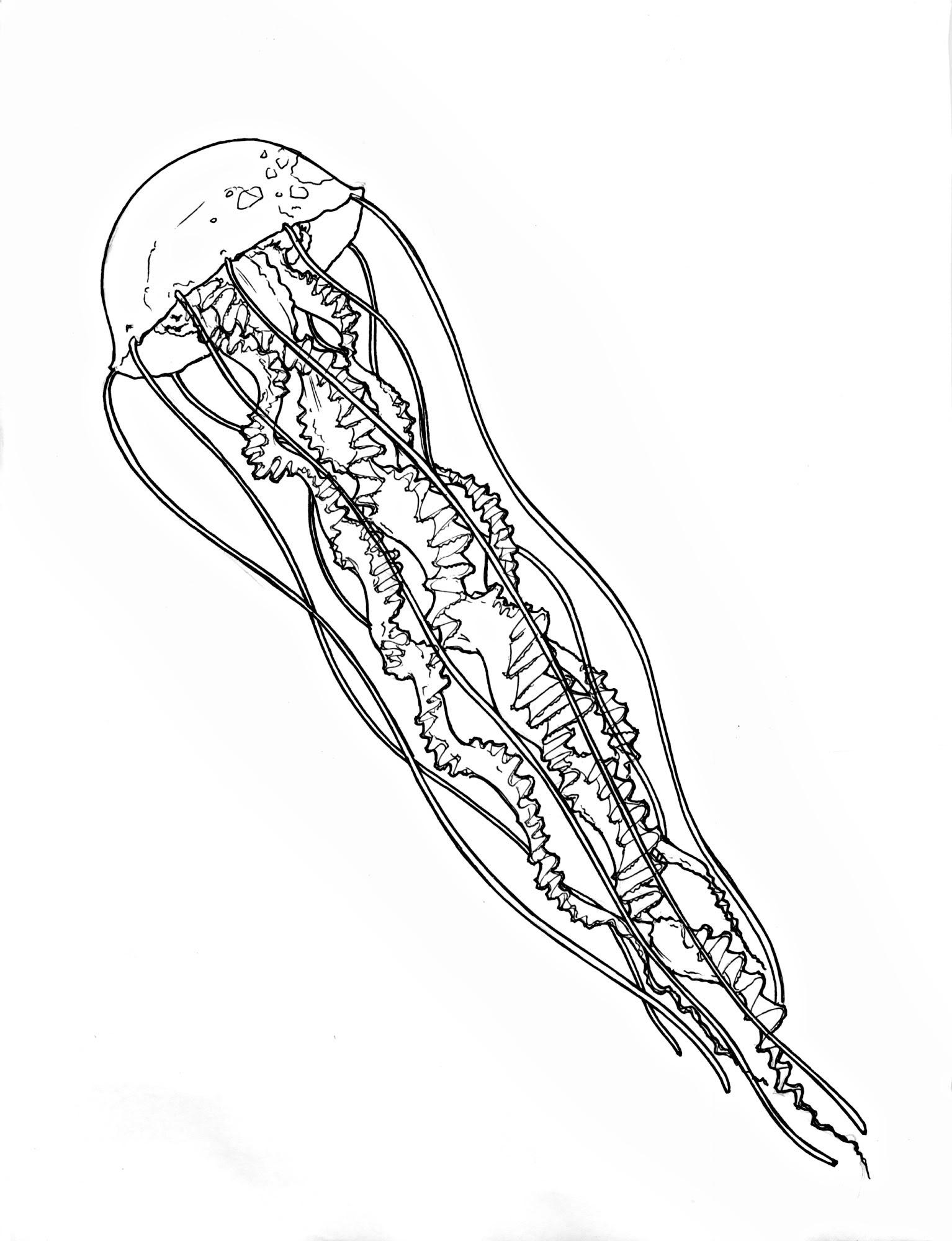 1534x2000 Jellyfish Tattoo