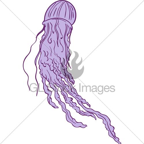 500x500 Australian Box Jellyfish Drawing Gl Stock Images