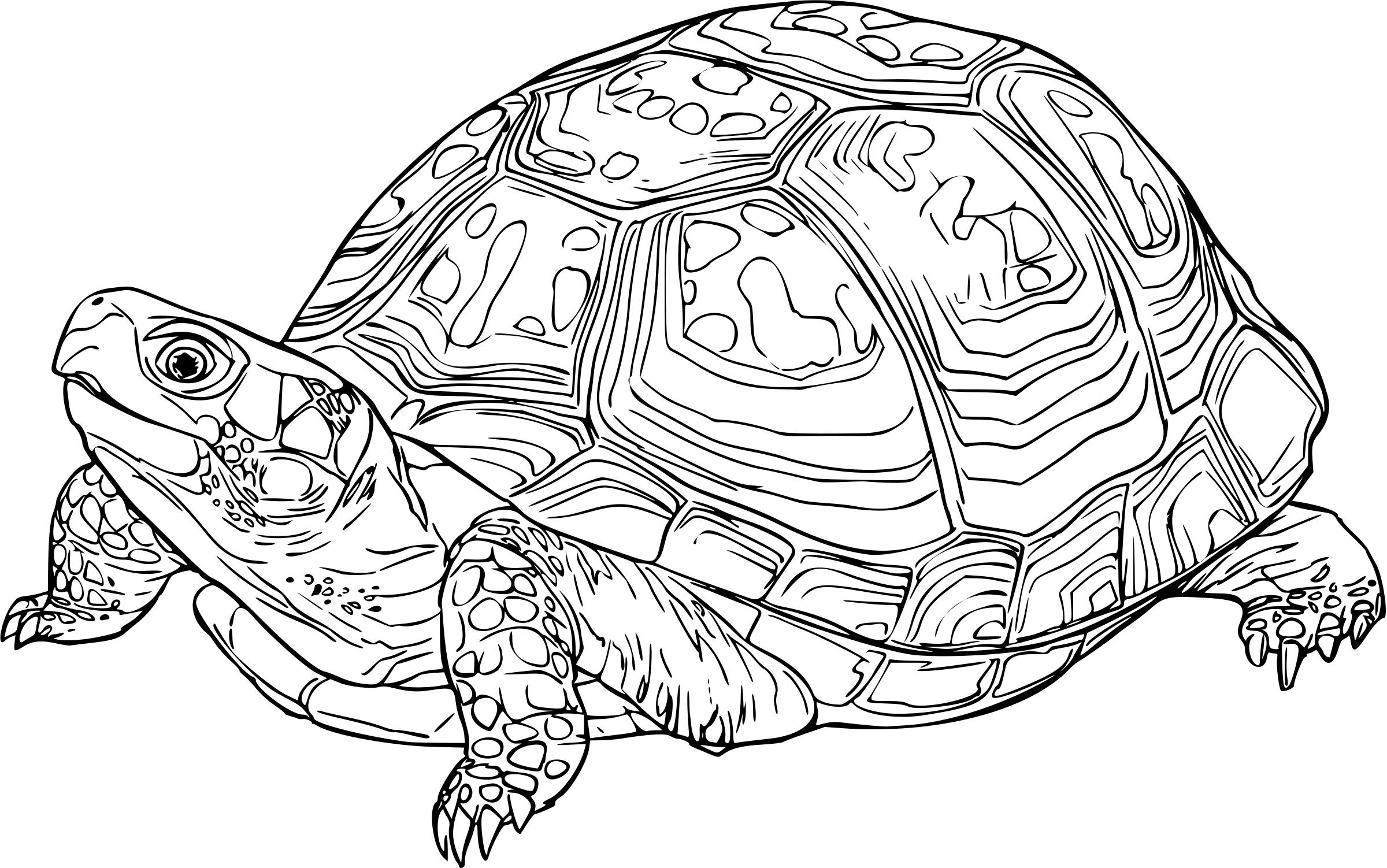 box turtle drawing at getdrawings com free for personal use box