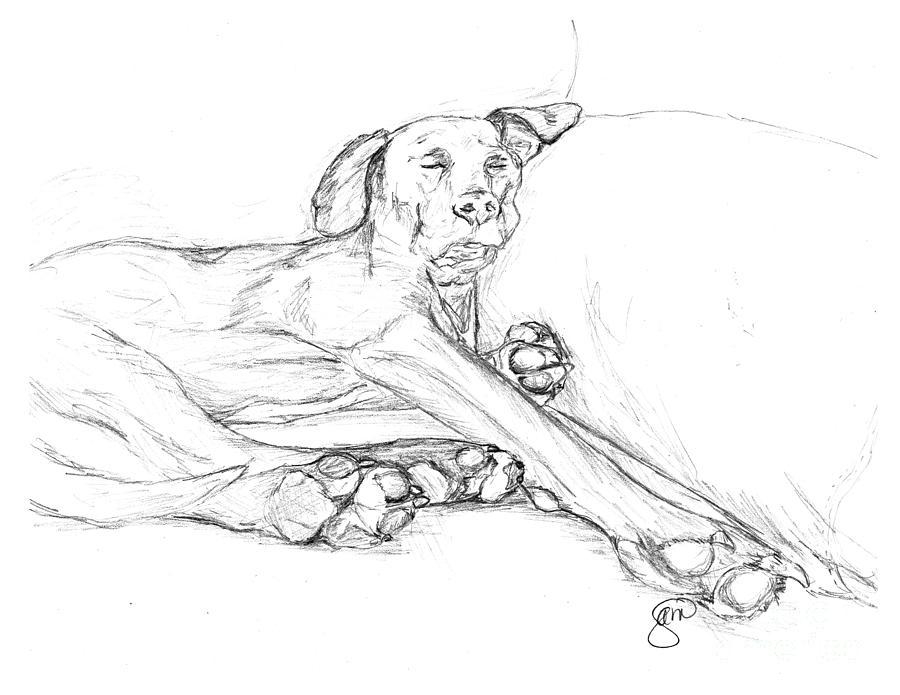 900x695 Boxer Dog Drawings Fine Art America
