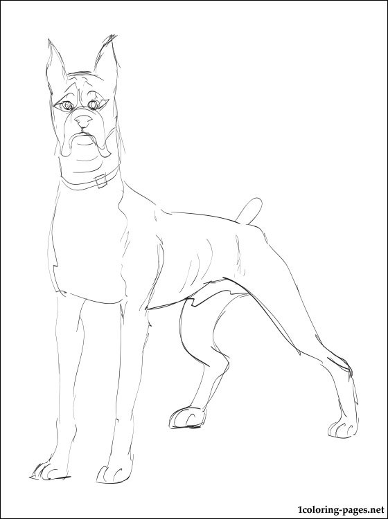 560x750 Boxer Dog Coloring Page Coloring Pages