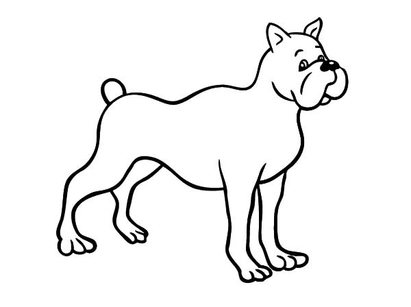 600x448 Drawing Boxer Dog Coloring Pages Best Place To Color