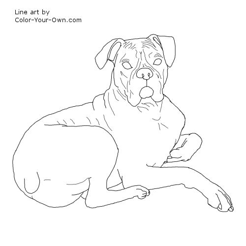 500x500 Boxer Dog Coloring Pages