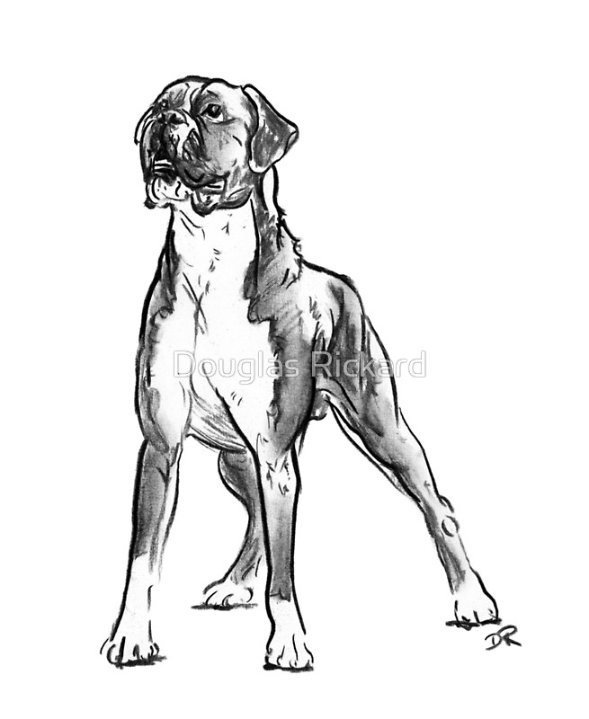 655x800 Boxer Dog Drawing Greeting Cards By Douglas Rickard Redbubble