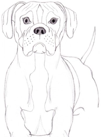 346x469 How To Draw A Dog Boxer Drawing Amp Art Supplies