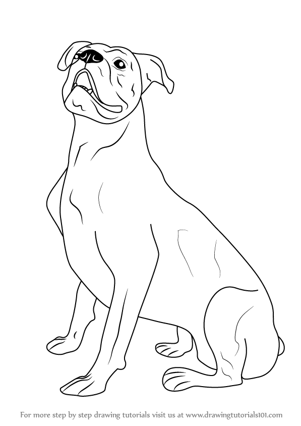 597x844 Learn How To Draw A Boxer Dog (Farm Animals) Step By Step