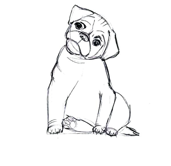 600x582 Boxer Coloring Pages Omnitutor.co