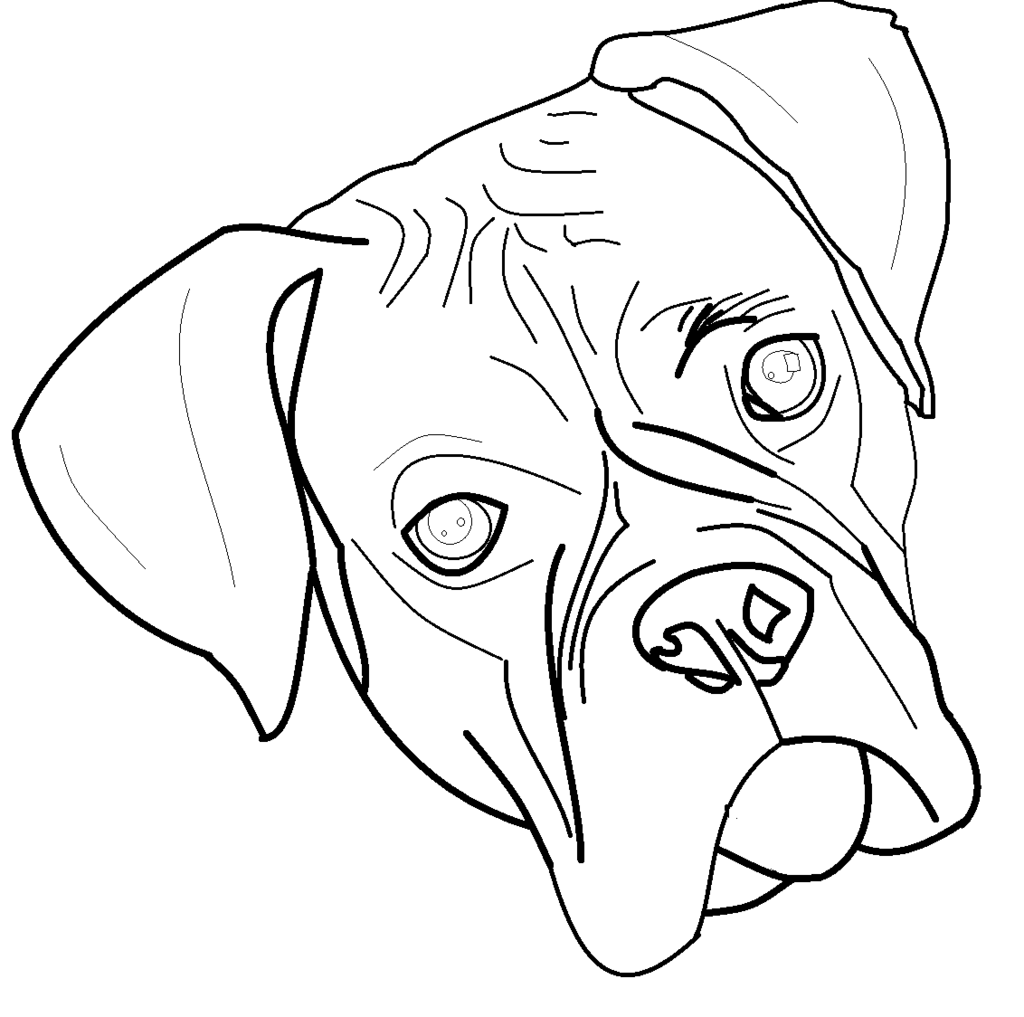 1024x1017 Boxer Line Art By Raccoondream