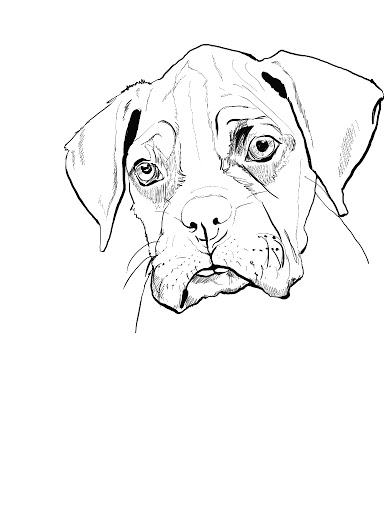 384x512 Boxer Coloring Pages