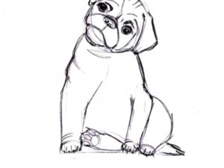 Boxer Puppy Drawing