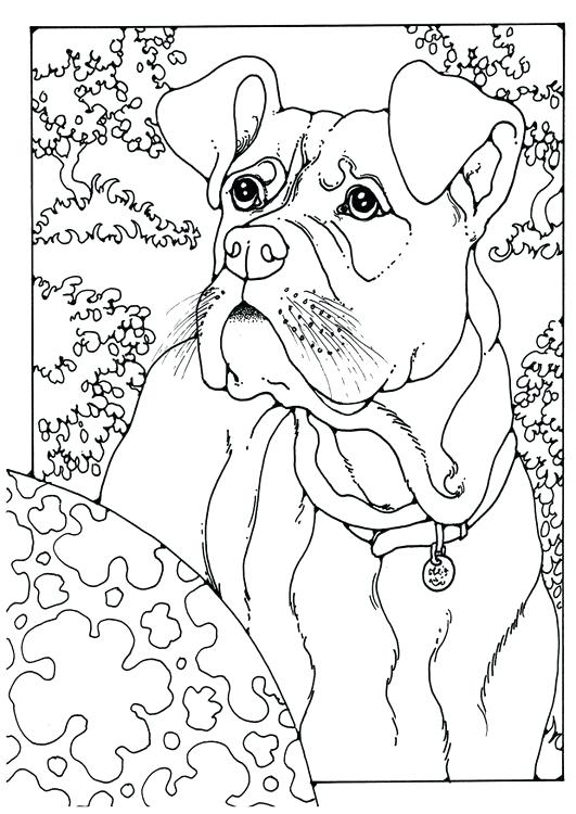 Boxer Puppy Drawing At Getdrawings Com Free For Personal Use Boxer