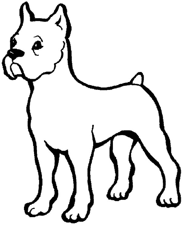600x800 Baby Puppy Coloring Pages Images Boxer And Drawing Boxer Dog
