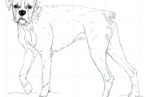 210x140 How To Draw A Boxer Puppy How To Draw A Boxer Dog Step Step