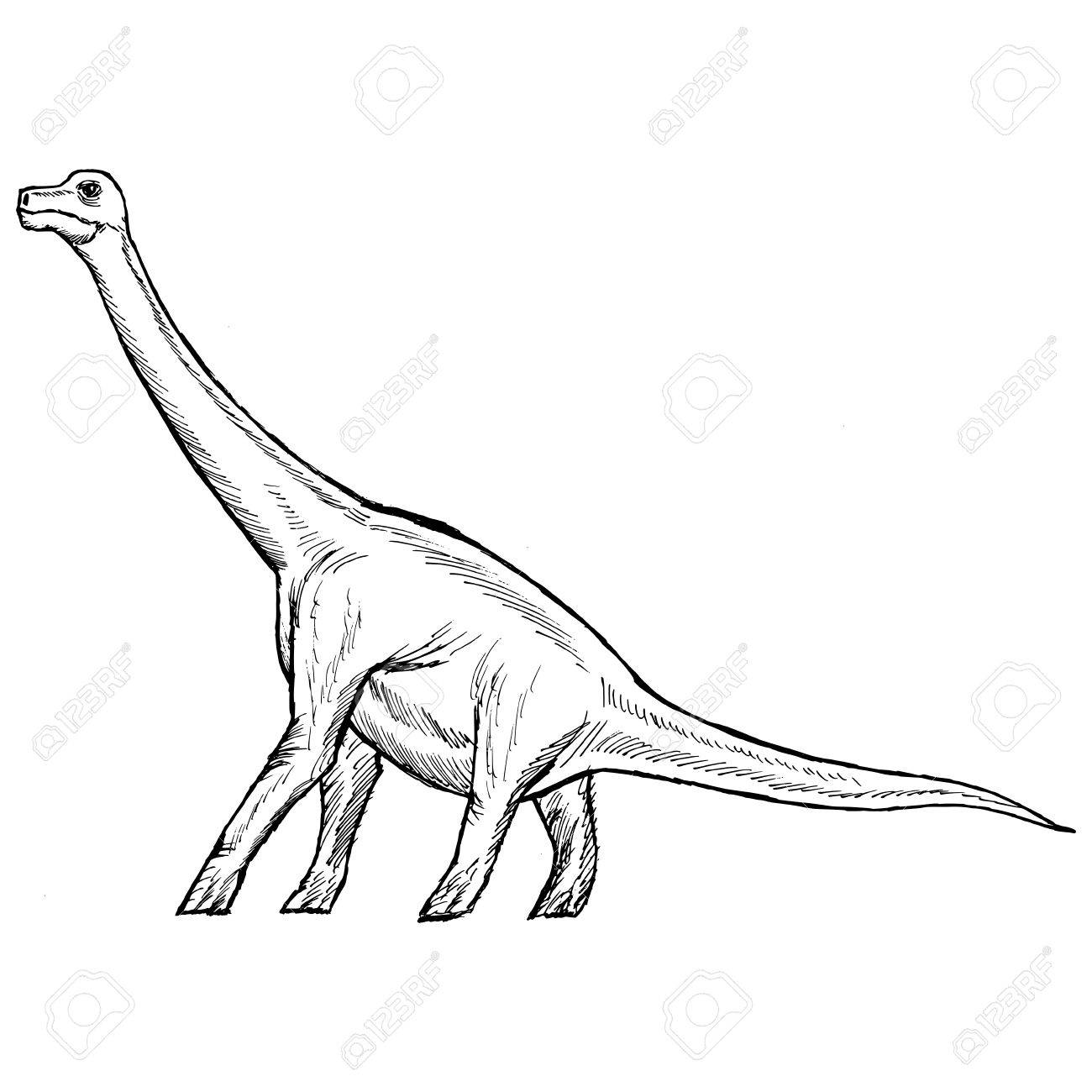 1300x1300 Hand Drawn, Sketch Illustration Of Brachiosaurus Royalty Free