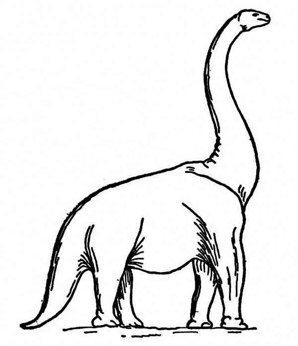 600x698 How To Draw A Brachiosaurus Coloring Page Color Luna