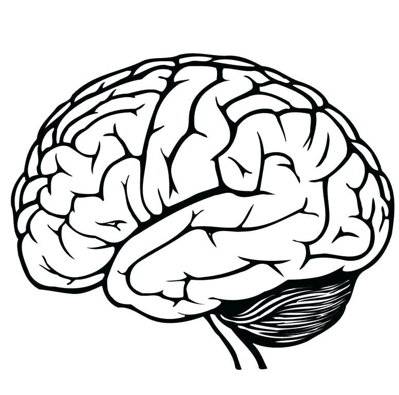 Brain Anatomy Book