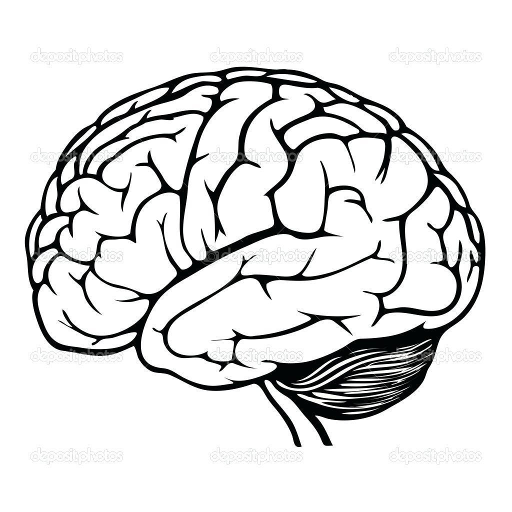 Brain Anatomy Drawing at GetDrawings.com | Free for ...