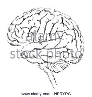 302x320 Human Hand Drawing Brain On Black Chalkboard Stock Photo, Royalty