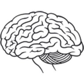 277x277 How Has The Human Brain Evolved