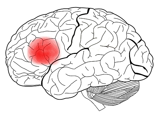 512x366 The Brain And Nervous System Noba