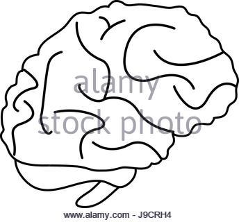 344x320 Brain Cartoon Illustration Draw Stock Vector Art Amp Illustration