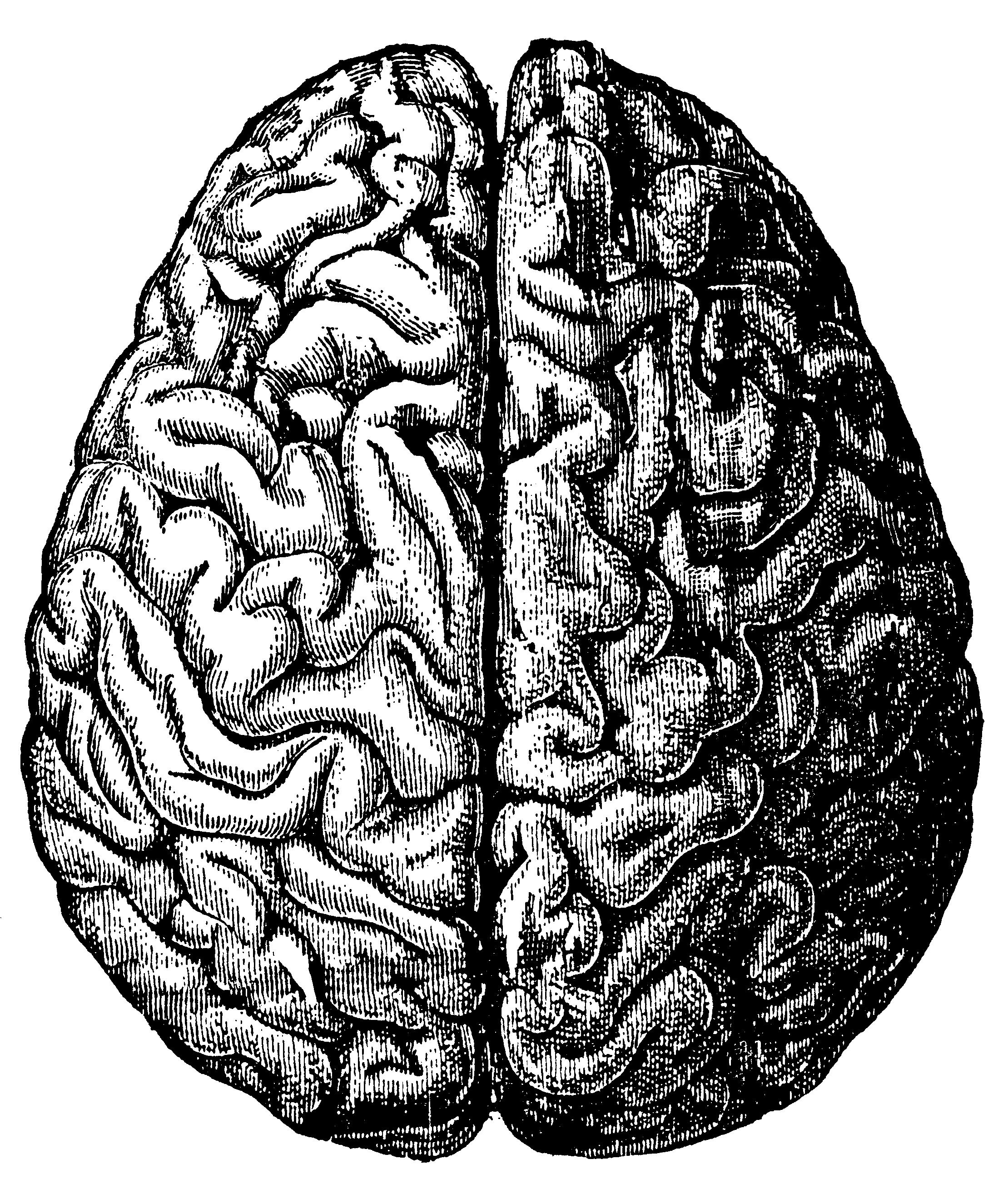 2219x2605 Free Vintage Brain Graphics Fab N' Free