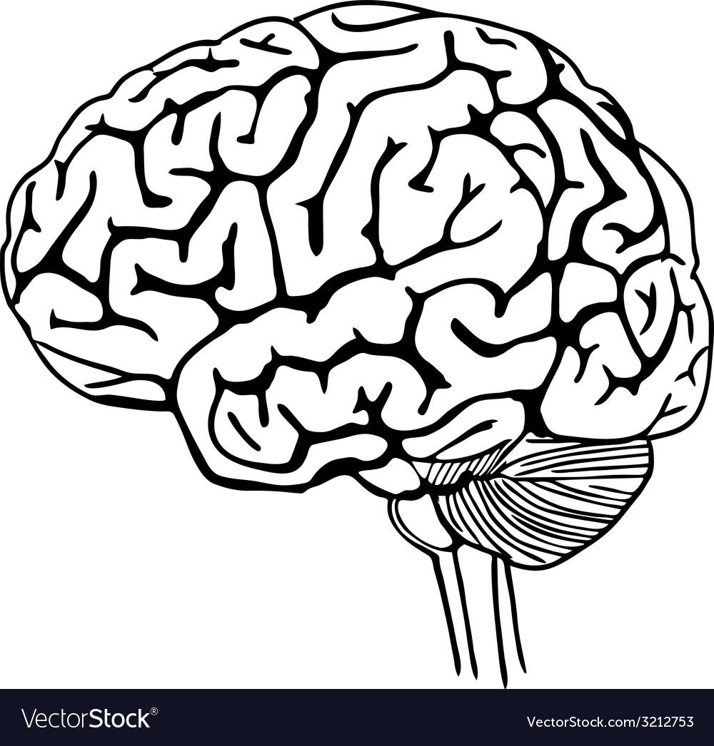 1000x1046 Gallery Brain Outline,
