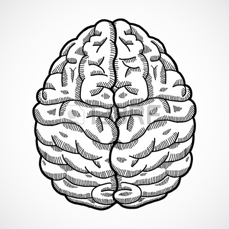 450x450 Human Brain Cortex Top View Sketch Isolated On White Background