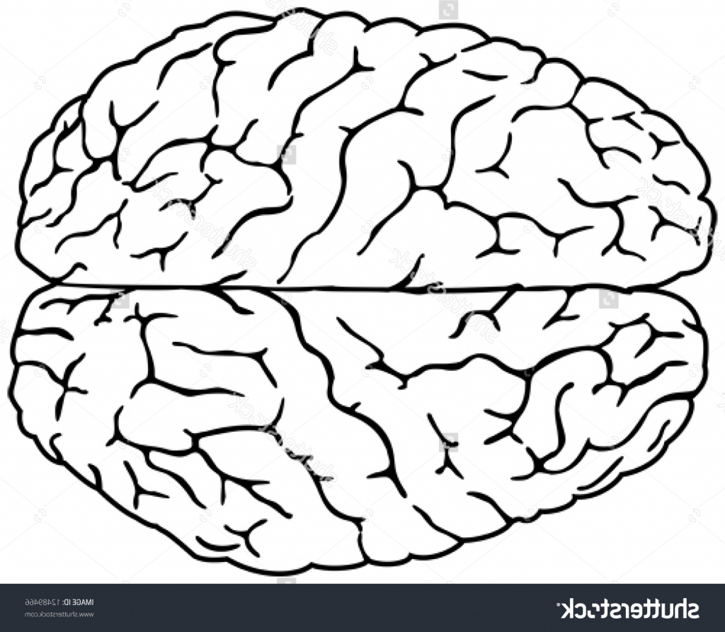 1024x893 Brain Drawing Simple Simple Drawing A Brain Simple Drawing
