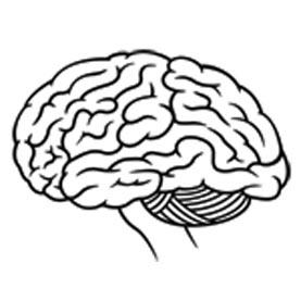 277x277 Human Brain Drawing Easy