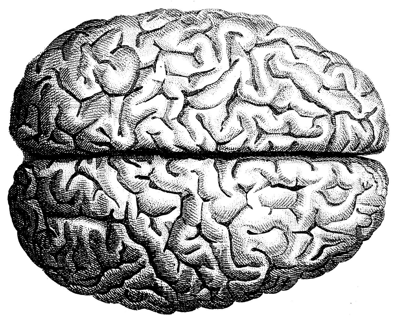 1500x1219 Human Brain Illustration Inspiration Brain