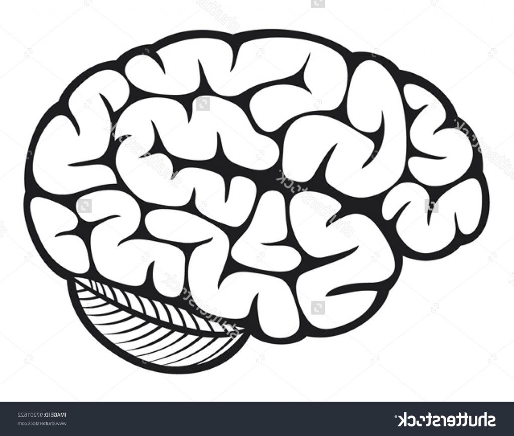 1024x869 Simple Brain Drawing The Human Brain Stock Vector Illustration