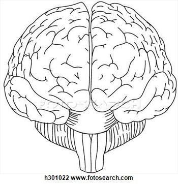 350x362 Brain Drawings Clip Art
