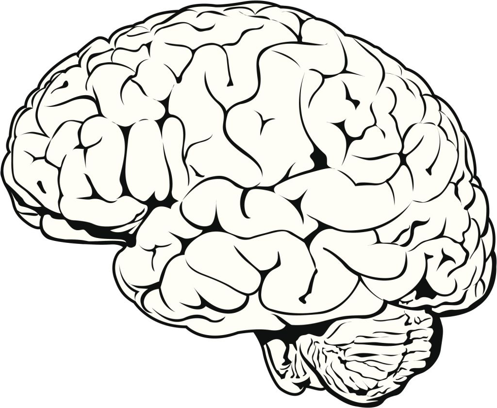 1024x840 Simple Drawing Of Brain Brain Clipartsco Art Reference
