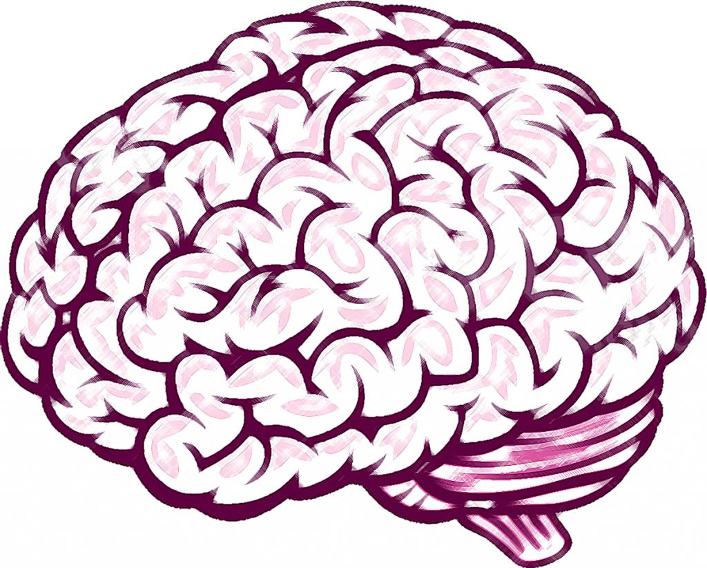 1024x822 Sketch Of Brain Inderecami Drawing