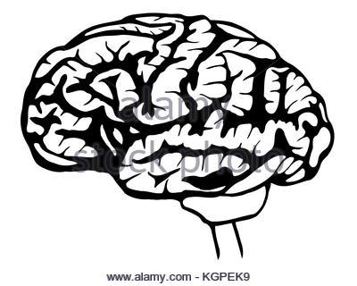 400x320 Sketch Human Brain In Vintage Style, Vector Stock Vector Art