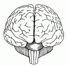 236x231 How To Draw A Brain