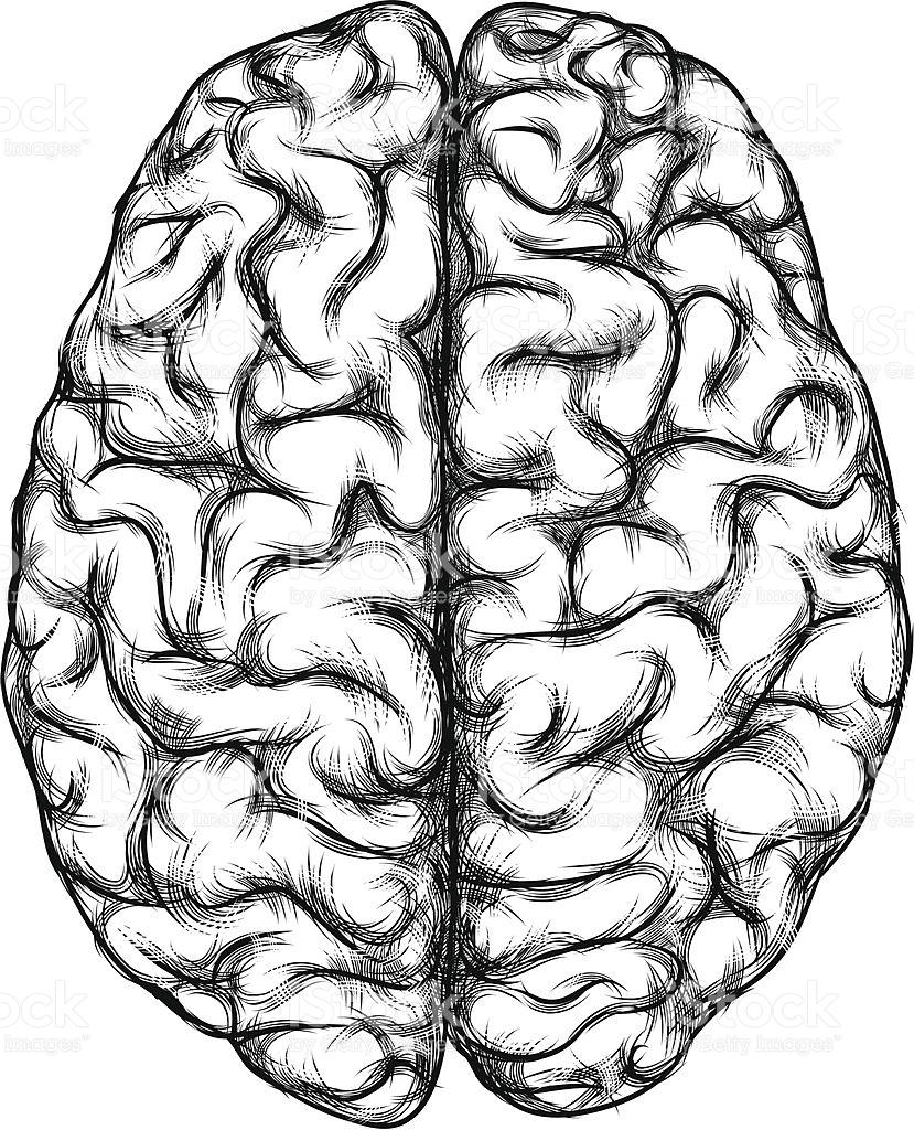 829x1024 Brain Drawings Clip Art 101 Clip Art