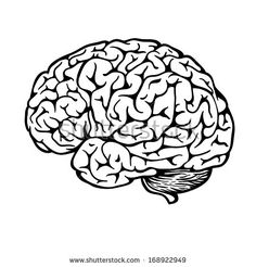 236x246 Human Brain Sketch
