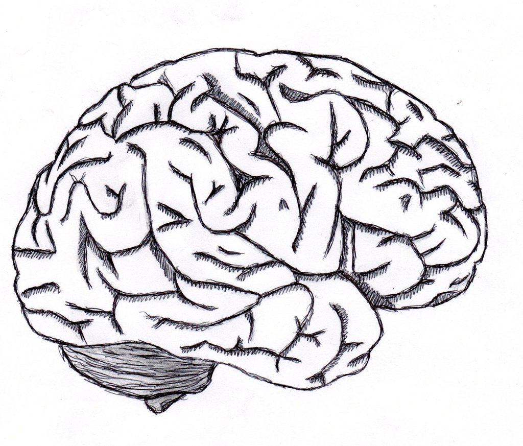 1024x873 Brain Sketch By Neverenderdesign
