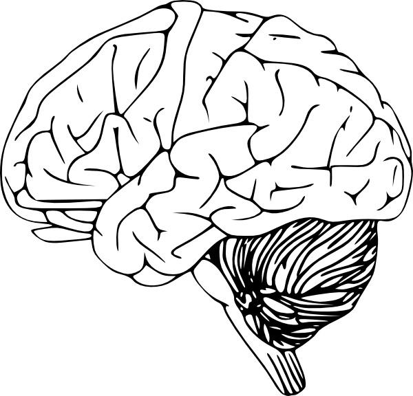 600x576 Brains Clipart Vector Art